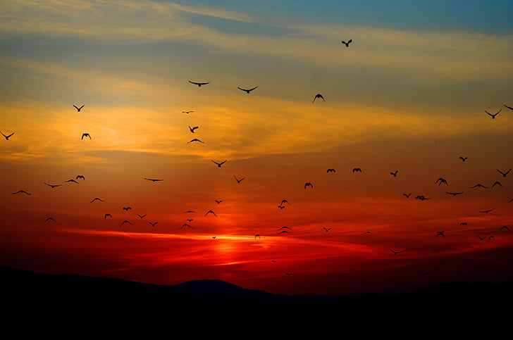 posta de sol, ocells, volant, cel, colors, colors, taronja