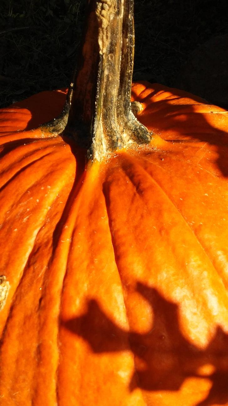 kritums, rudens, Ķirbīte, oranža, Halloween, oranžās krāsas, apdare