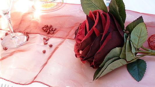 Rosa, vermell, romàntic, flors, afecte, l'amor, sentiments