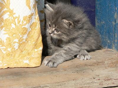 動物, 猫, 子猫, 子猫, 遊ぶ子猫, 国内の猫, ペット