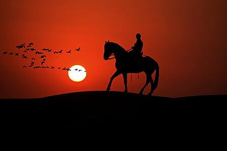 Reiter, cavall, animal, passeig, Hípica, oci, posta de sol