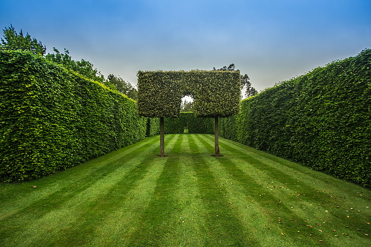 jardí, cobertura, verd, herba, arbre, color verd, natura