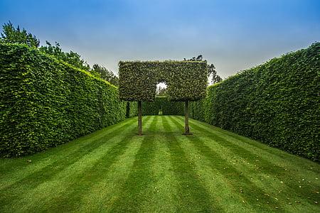 zahrada, živý plot, zelená, tráva, strom, zelená barva, Příroda