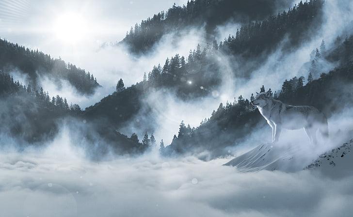 wolf, wolves, snow wolf, landscape, atmosphere, animal world, predator