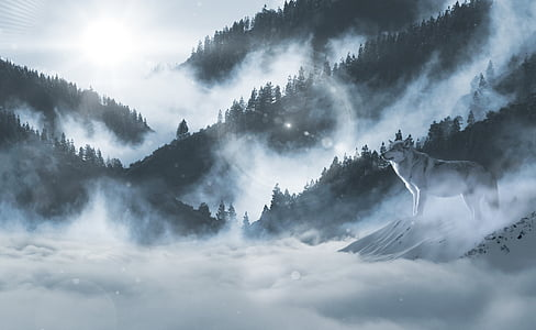 vilkas, vilkai, sniego vilkas, kraštovaizdžio, atmosfera, gyvūnų pasaulis, plėšrūnas