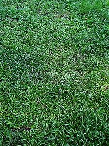 zelené listy pozadia, tráva, zelená tráva, zelené kučeravé listy pozadia, zelené pozadie, pozadie, Leaf