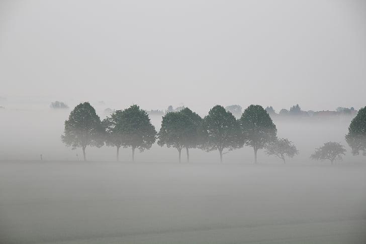 árvores, nevoeiro, paisagem, atmosfera, natureza, árvore, névoa