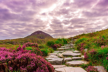 ireland, national park, hiking, away, steinweg, stones, flowers