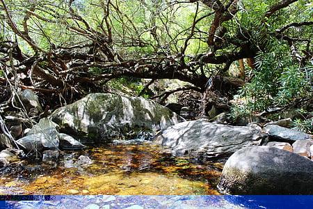 river, south africa, bach, rest, idyllic, landscape, nature