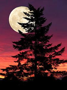 fantasy, light, full moon, fir, mood, romantic, mystical