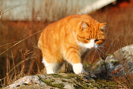 cat, spring, kitty, fluffy, cute cat, pet, animal