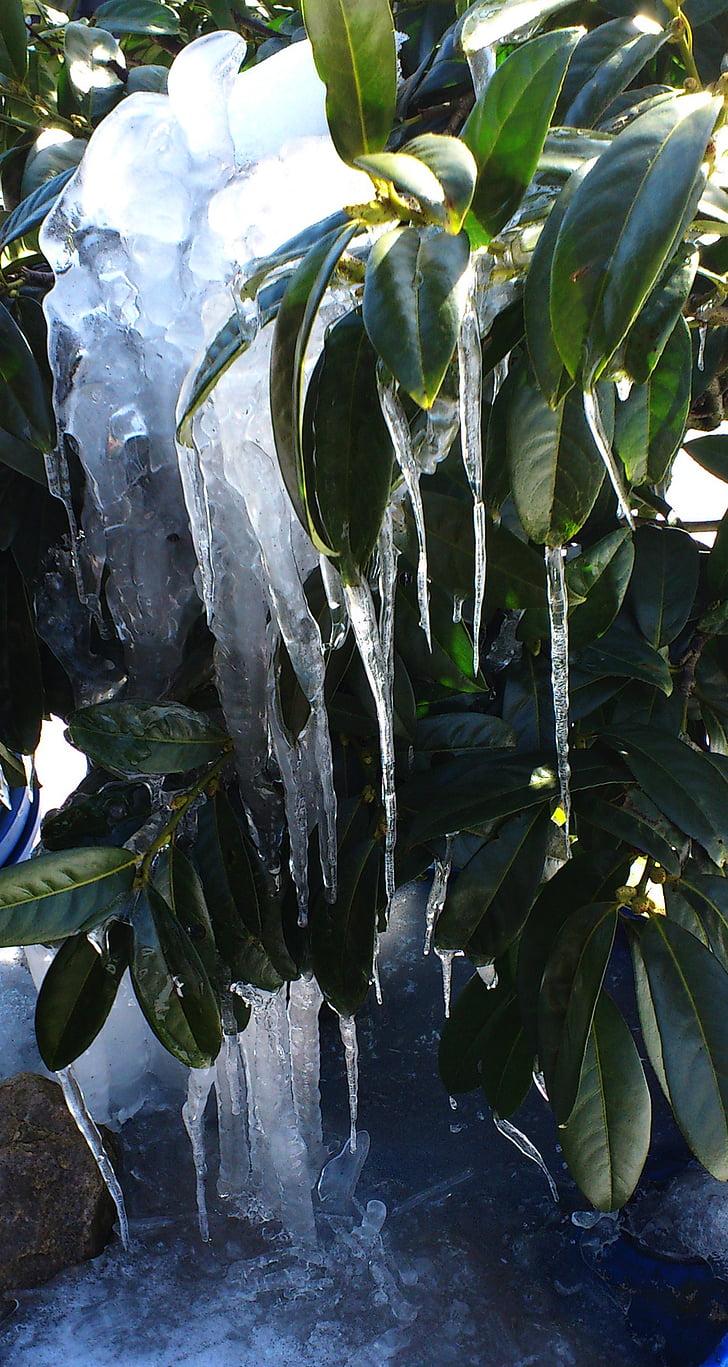 ice, lohrbeerbusch, winter, water, rain, nature