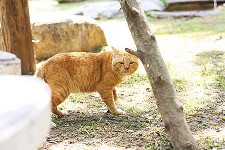 猫, 動物, ペット, 小さな, 子猫, 面白い, 動物園