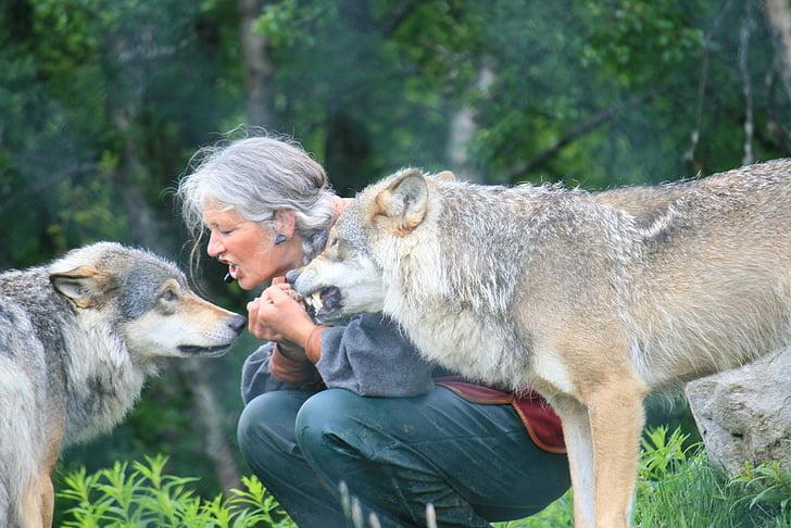 wolf, nature, farm, woman, risk, training, animal trainer