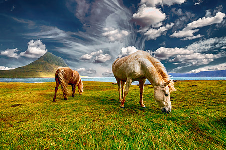 horses, landscape, nature, field, grass, animal, countryside