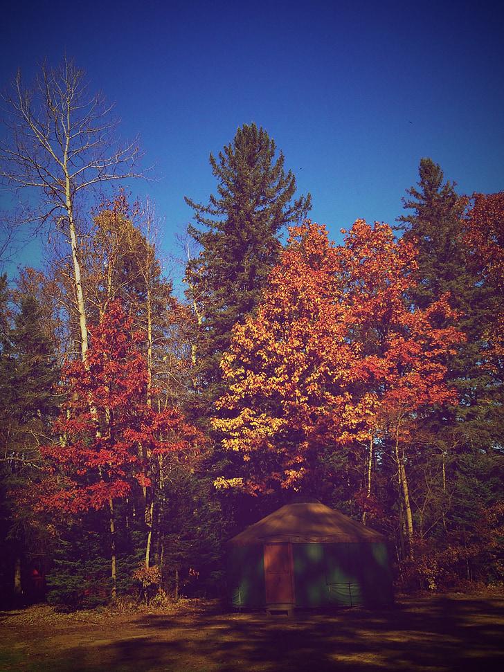 πτώση, δέντρο, το φθινόπωρο, φύση, σεζόν, φύλλο, δάσος