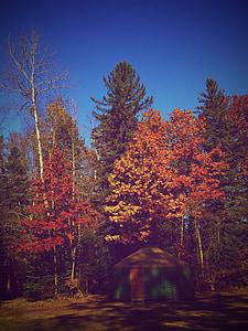 upadek, drzewo, jesień, Natura, sezon, liść, lasu