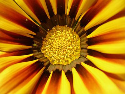 Sun flower, lill, kollane, kollane napvirág, Bloom, Aed, lilleaed