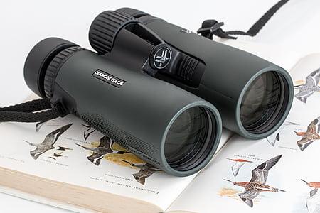 binoculars, birdwatching, spy glass, spying, spy, watch, look