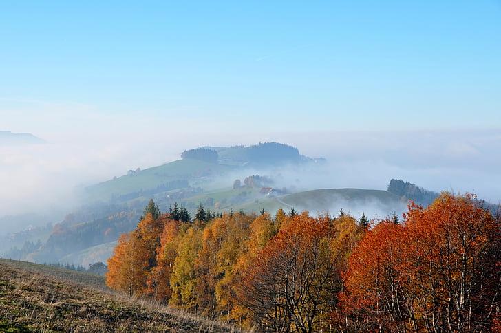 Outono, humor de outono, folhas coloridas, emergir