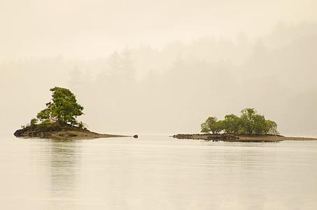 albero, alberi, foglie, foglia, nebbia, Isola, Meteo