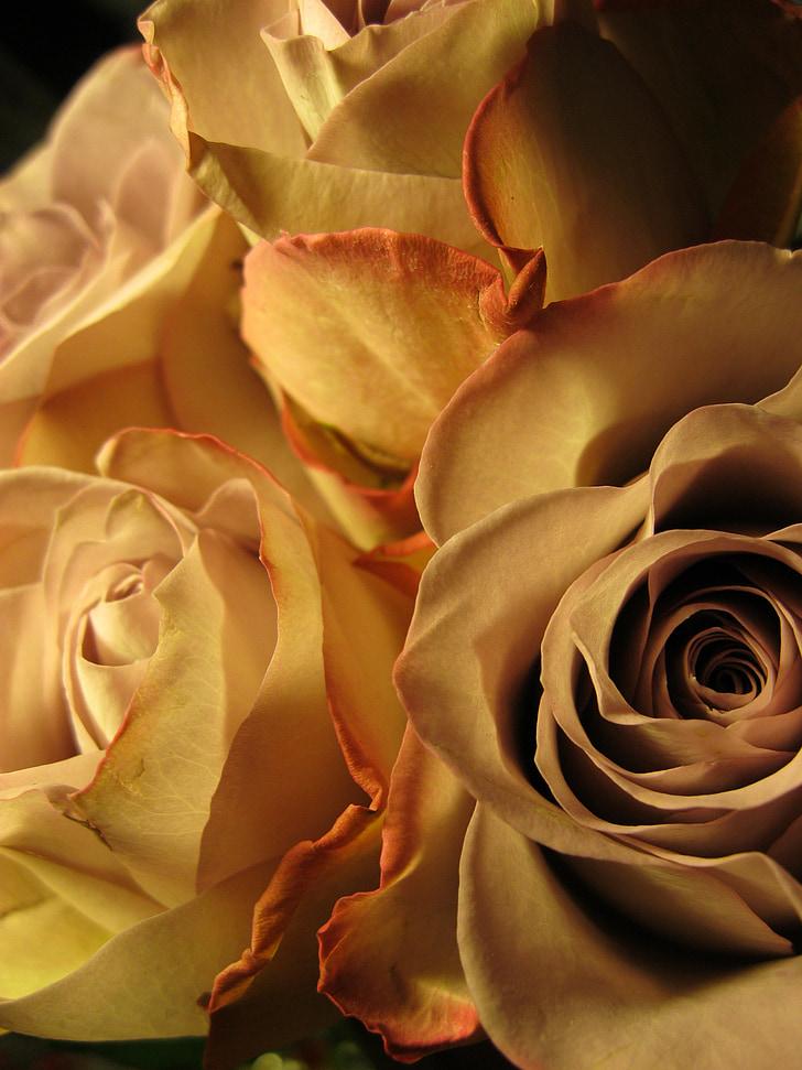 tõusis, roosa õitega, lill, õis, Bloom, aroom, Kaunis