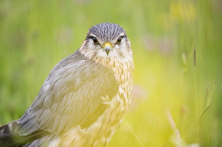 животните, животинска фотография, птица, макрос, животни в дивата природа, едно животно, животните дивата природа