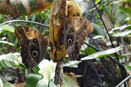 vlinders, insecten, vlinder, natuur, lente, Tuin, zomer