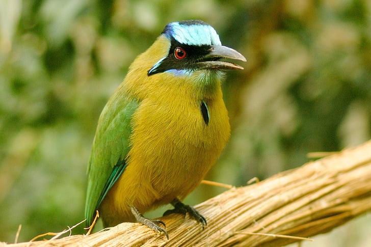 ptica, exot, eksotične, narave, živalski vrt, eksotičnih ptic, živali