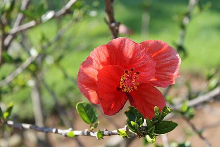 lill, loodus, punane, lilled, suvel, taim, Aed