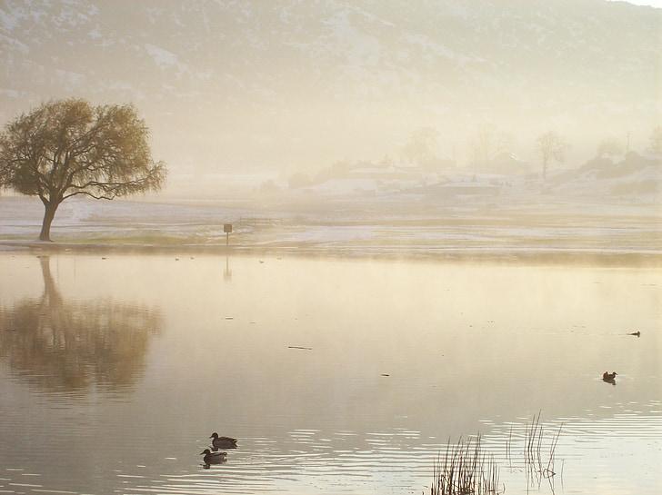 Lake, vee, Daybreak, Scenic, maastik, peegeldus, Hills