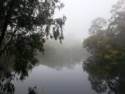 nebbia, Isola, Lago, alberi, inverno