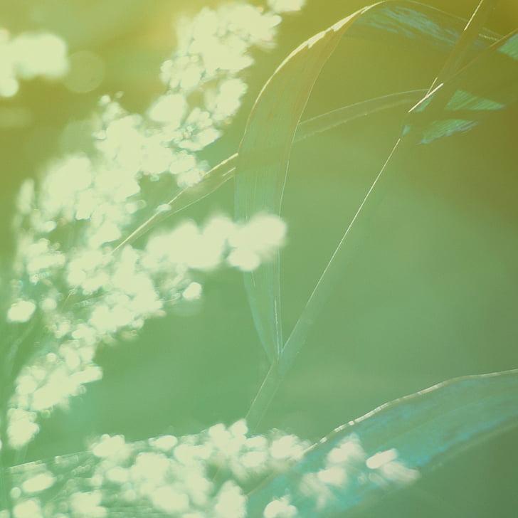 natuurlijke, groen, stro, macro, seizoen, Botanische, zonlicht