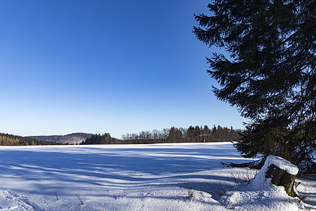 winter, ice, frost, wintry, cold, trees, nature