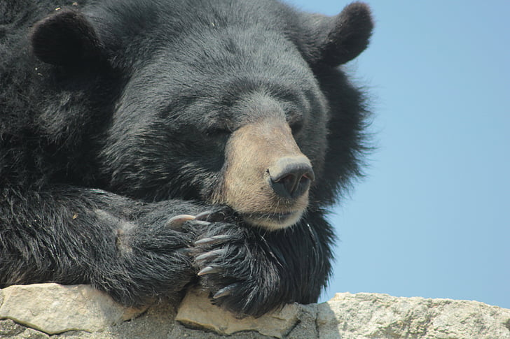 ós, tranquil, negre