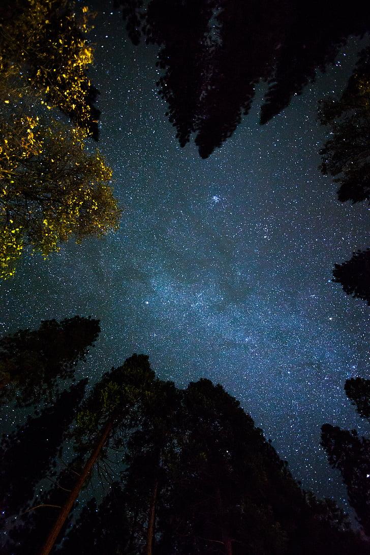 antenne, Vis, fotografi, himmelen, plass, Star, treet