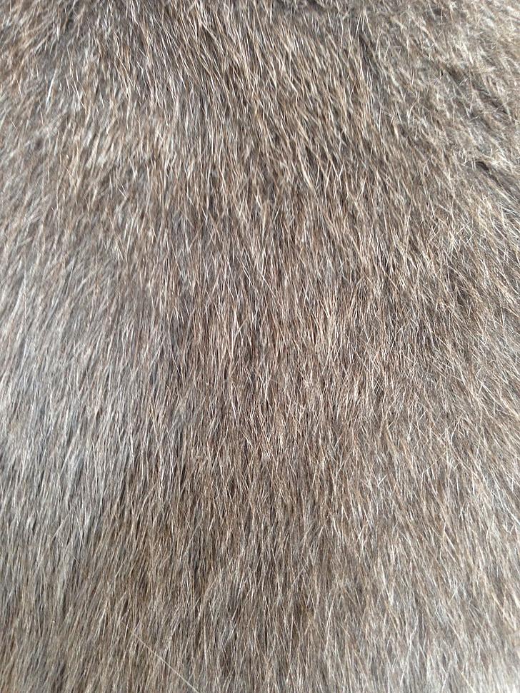 cat fur, fur, hairy, wuschelig, sweet, animal, woolly