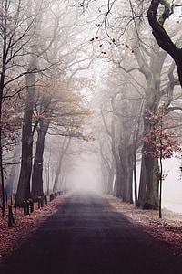 mgła, Park, Natura, krajobraz, lasu, drzewa, nastrój