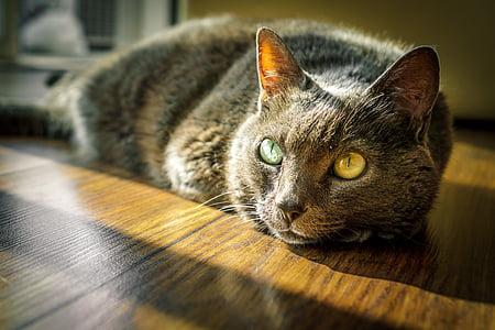 cat, kitty, feline, pet, animal, domestic, kitten