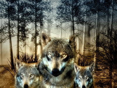 wolf, forest, puppies, wild animal, hunter, carnivores, furry