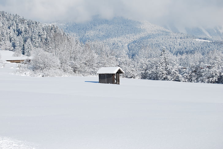 cabina, hiverns, neu, trepants, natura, paisatge d'hivern, paisatge nevat