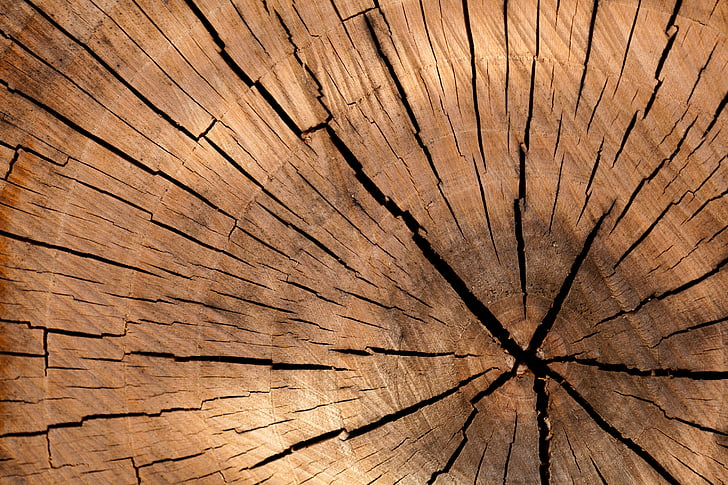 background, brown, circle, cut, detail, log, lumber