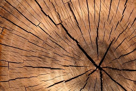 pozadí, hnědá, kruh, řez, detaily, protokol, dřevo