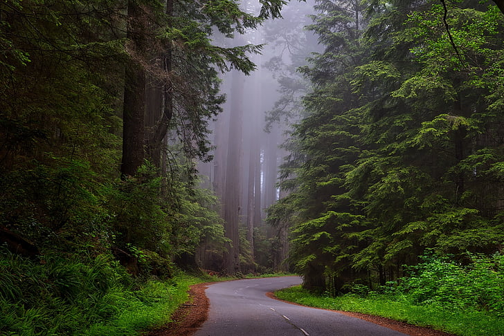 Redwood nationalpark, Californien, HDR, landskab, naturskønne, Dawn, Daybreak