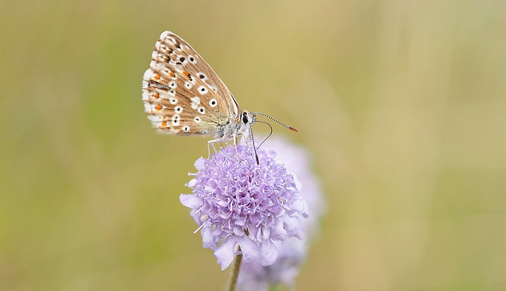 kukainis, daba, dzīvot, tauriņš - kukaiņu, dzīvnieku, dzīvnieku spārnu, vasaras