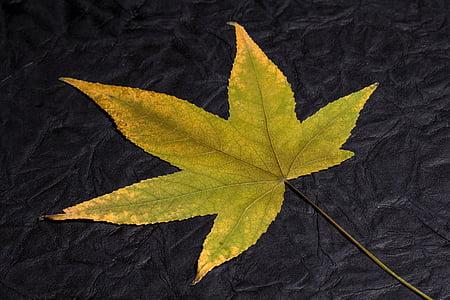 leaf, foliage leaf, fall foliage, fall leaves, background, leaves, foliage