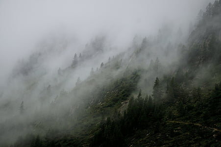 foggy, landscape, mist, mountain, nature, outdoors, trees