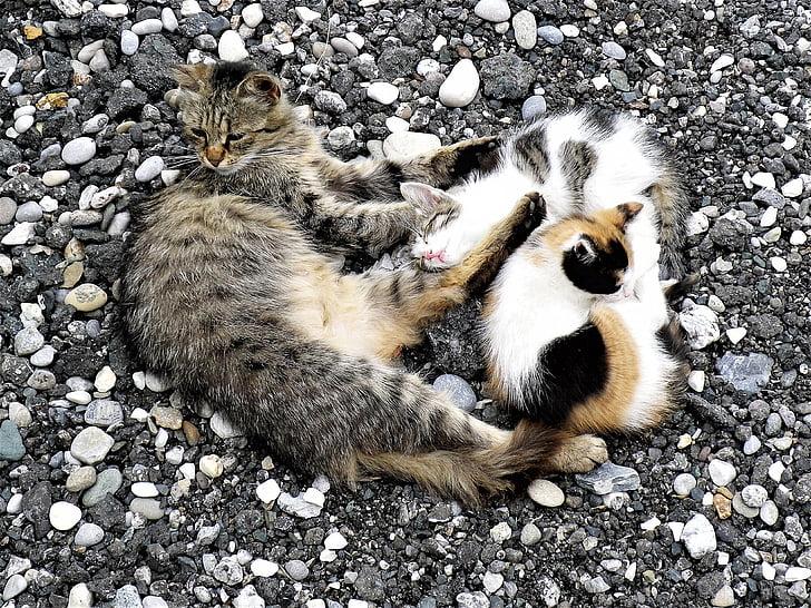 kat, relaxen, bezorgdheid, binnenlandse kat, middag rest, huisdieren, dier
