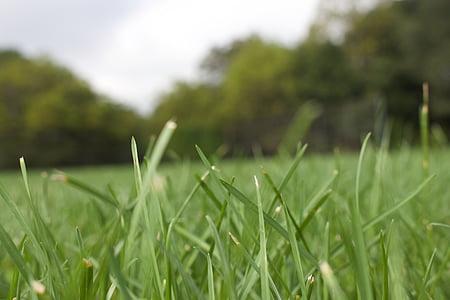 γκρο πλαν, περιβάλλον, το πεδίο, Κήπος, χλόη, πράσινο, γκαζόν