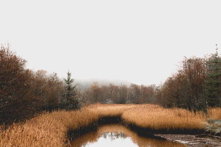 pântano, floresta, Irlanda, Mesquita, juncos, árvores, água